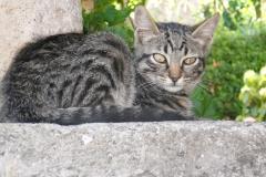 gatto_a_civita