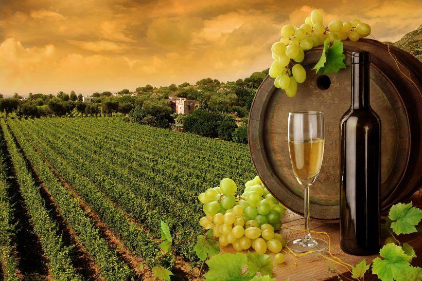 wine-tuscany1-ridim